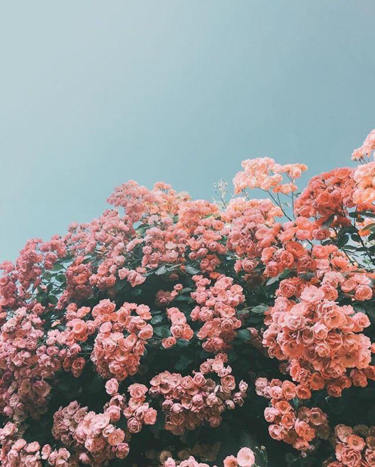 pink flowers grow Wallpapers bonitos, Paisagem flores