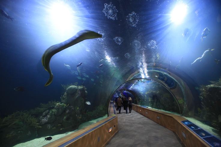 188 best images about ciudad de las artes y las ciencias Entradas aquarium valencia
