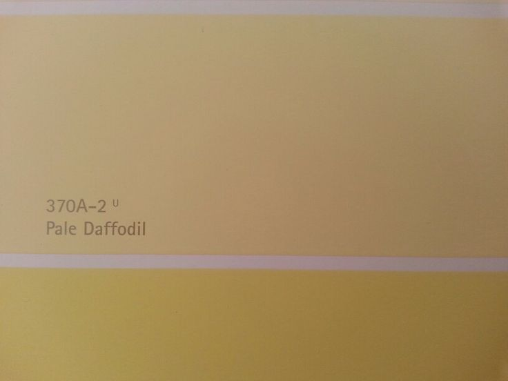 Interior Wall Paint Color Behrs Pale Daffodil 370A 2