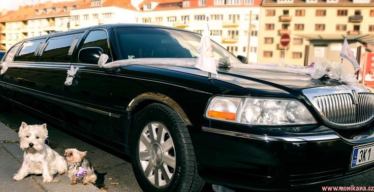 Nejsou na prvním rande úžasní? Rogzee a Lili byli trochu před nástupem do krásné limuzíny nervózní.