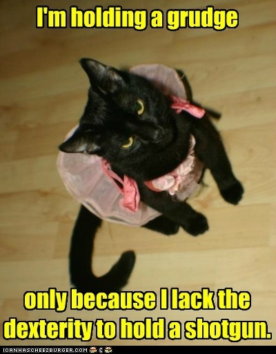 Pass the kleenex!: The Holidays, Dresses Up, Halloween Costumes, Funny Animal, So Funny, Weights Loss, Kitty, Photo, Black Cat
