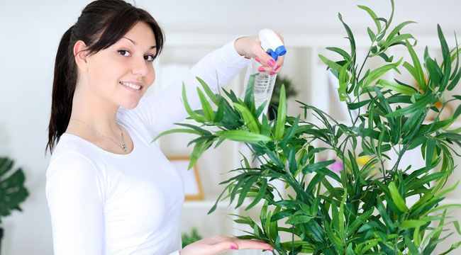 Комнатные растения, очищающие воздух в квартире: топ 5