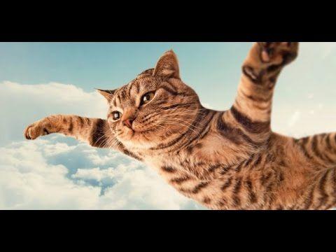 Funny Cat Vines – Short Funny Cats Videos – part 2