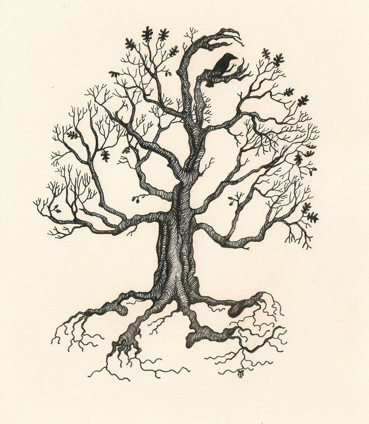 Oak Tree With Roots Sketch ACEO PRINT OF SKETCH R...
