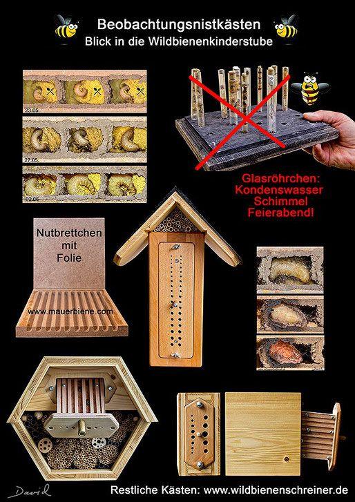 Insektenhotel Insektennisthilfe Nisthilfe Beobachtungsnistkasten Wildbienenschreiner Larvenentwicklung Kokon  Mauerbiene nesting aid insect hotel bug house mason bee cocoon