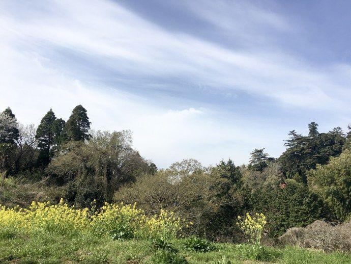 ランニング日記(2017.04.10) いいお天気です   ランニング   走る薬剤師 大徳秀幸 公式ブログ
