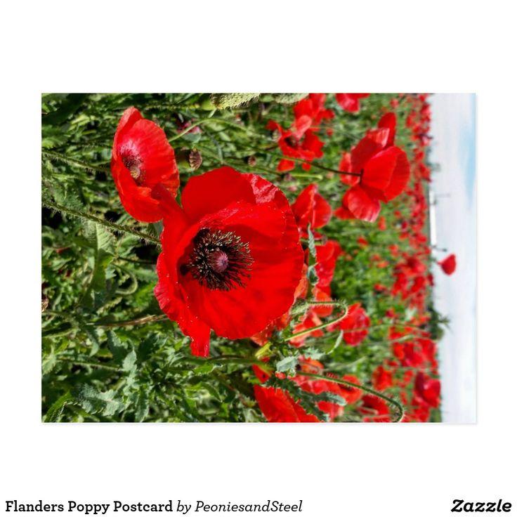 Flanders Poppy Postcard