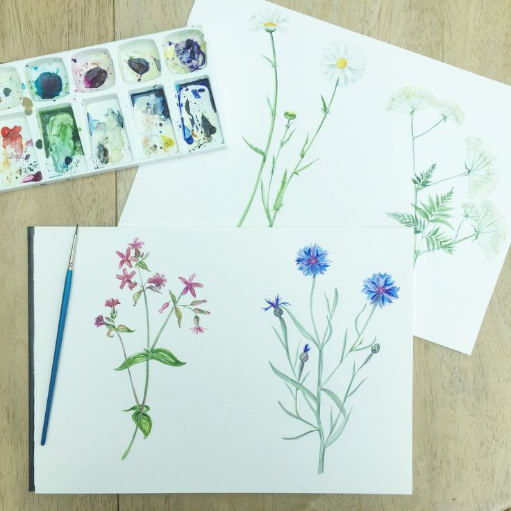 Some of the delightful floral and fauna attendees of our botanical watercolour workshops will learn to paint.