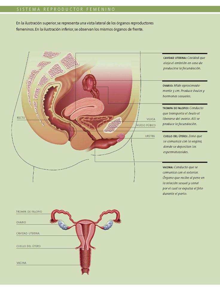 Conociendo mas sobre anatomia - 5 8