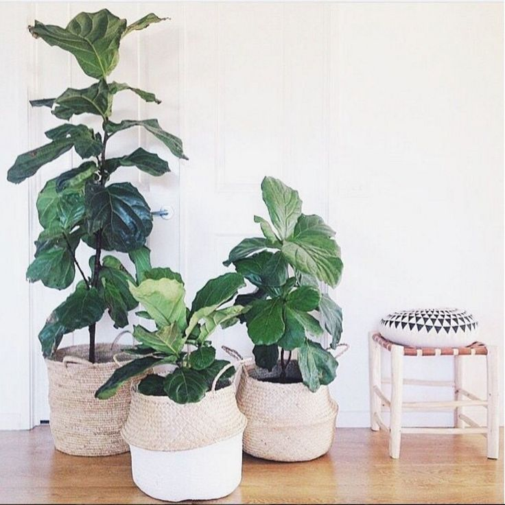 Best 25 Indoor Hanging Plants Ideas On Pinterest Hanging Plants