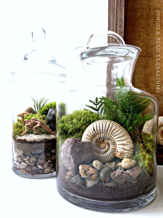 Ammonite Fossil Terrarium - Snail Shell Prehistoric Plant in Glass Jar - Jurassic Collectible Fossil Display
