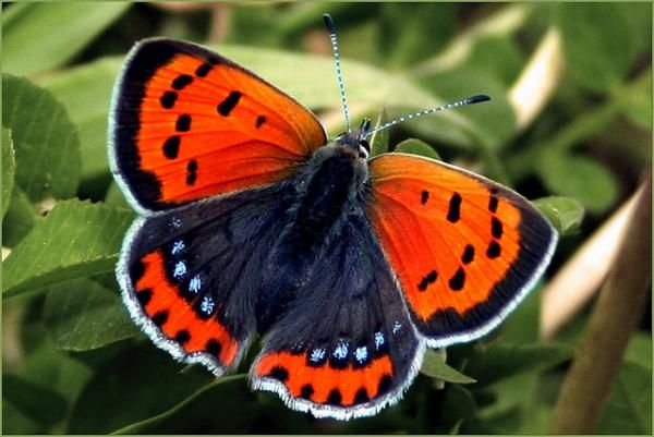 butterfly effect by nightmask - 30 Beautiful Butterfly Pictures  <3 !