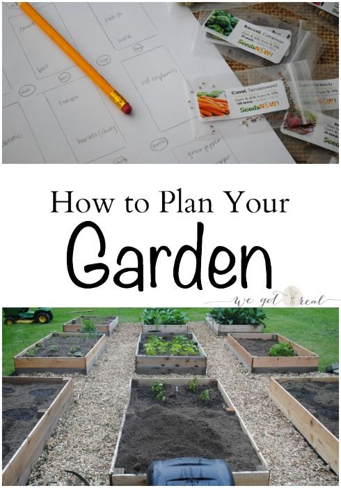 How to Plan Your Garden.  Taking these 6 steps will go a long way to growing a successful garden.