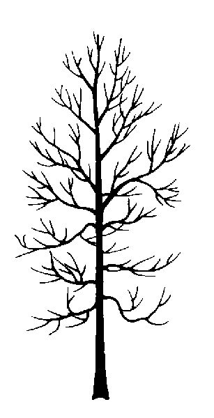 """swamp tree silhouette - can make very very simple cypress tree silhouettes with """"moss"""" draping in front of it. Will only work if there is a cyc. Wishful thinking."""