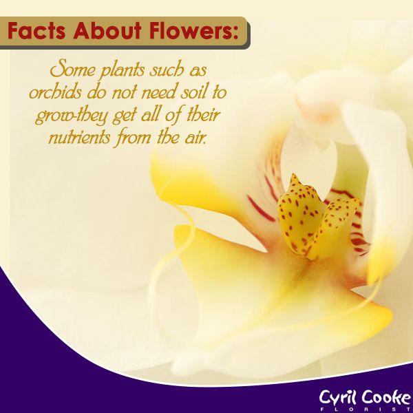 Wedding Bouquet Quotes: 48 Best Florist Quotes Images On Pinterest