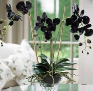 cosmética, cosmética facial, crema facial, crema orquídea, crema de orquidea negra, galium, blog de belleza, solo yo, blog solo yo,