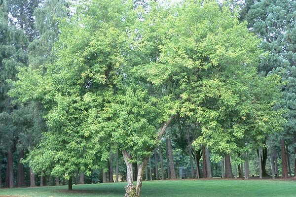 19 best City of Trees, Chico CA images on Pinterest | Girls, Chico ...