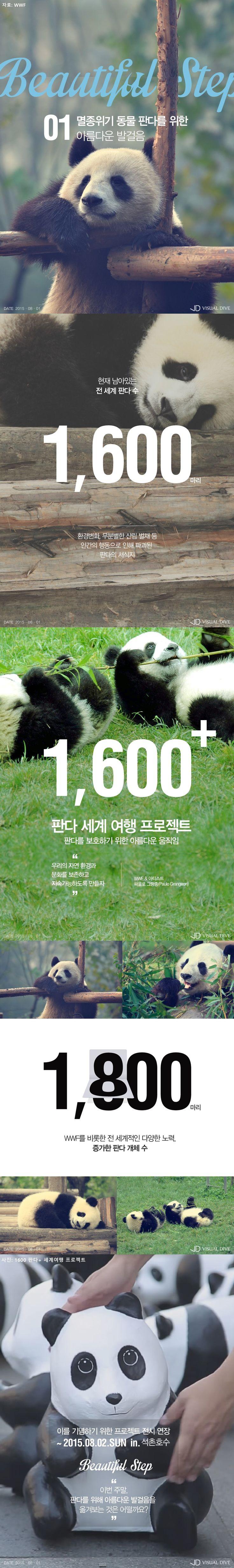 [Beautiful Step] 멸종위기 판다 위한 '1600 판다+ 프로젝트' [카드뉴스] #Panda / #Infographic ⓒ 비주얼다이브 무단 복사·전재·재배포 금지