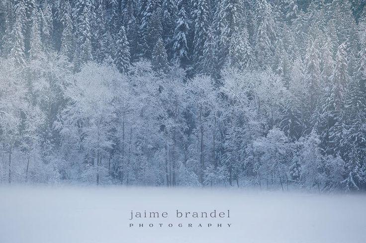 Photography print: first snow, snowfall, snow, winter trees, snow covered trees, fine art print by JaimeBrandelPhoto on Etsy