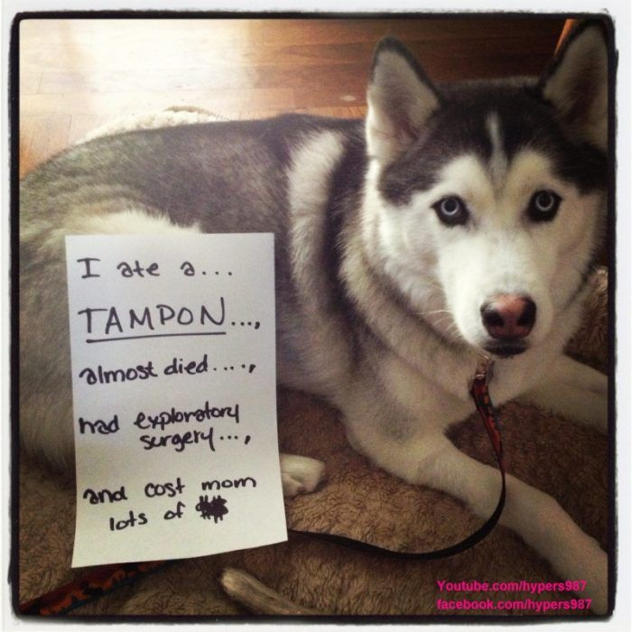 Dog Shaming Memes Humor Quotes Animal Fun Dog Shaming Dog