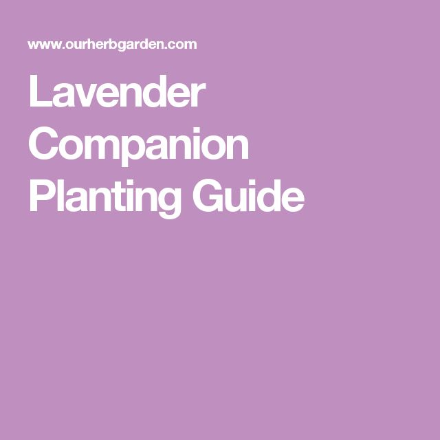 The  Best Companion Planting Guide Ideas On