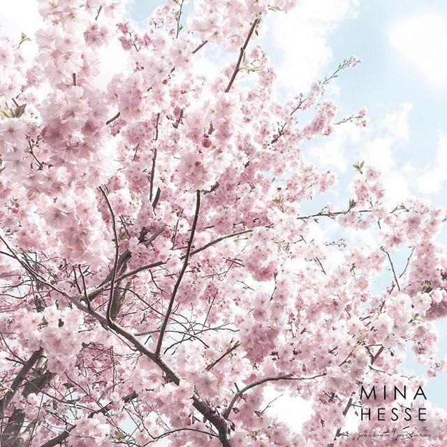 Unser neuer Sonnenschirm. 100% organisch, mehrfarbig, atmungsaktiv ✔️ Frühling läuft.