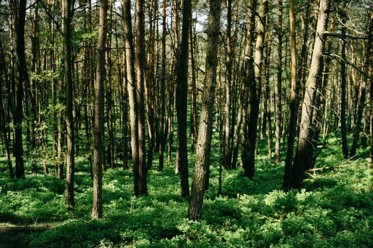 Spring forest  free high-resolution photo about Landscape Nature beautiful color contrast country day ecology environment forest Forestry fresh germany grass green greens hiking landscape natural nature Nature landscape nobody outdoor outdoors park rural season spring summer tree wild wilderness wood wooden woods
