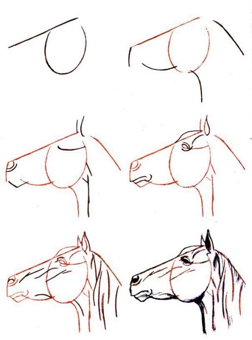 comment dessiner un cheval facile plus