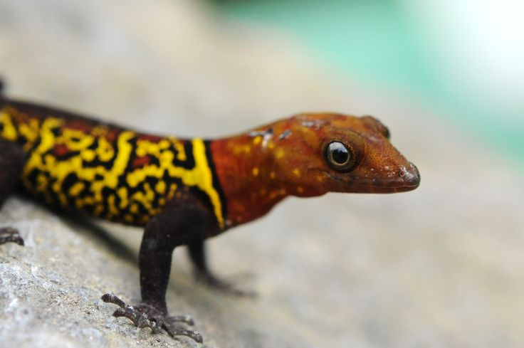 Best 25 Reptile Terrarium Ideas On Pinterest Snake