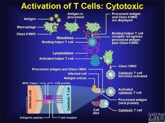 Best 208 Immunology images on Pinterest   Other