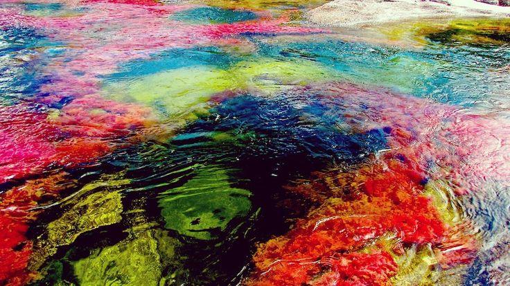 """""""虹が溶けた川""""と称される奇跡の七色の川!コロンビアが誇るキャノ・クリスタレス   SELECTY"""