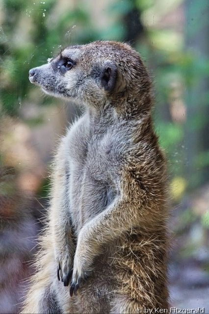 32 best Zoo animals and activities images on Pinterest Zoo