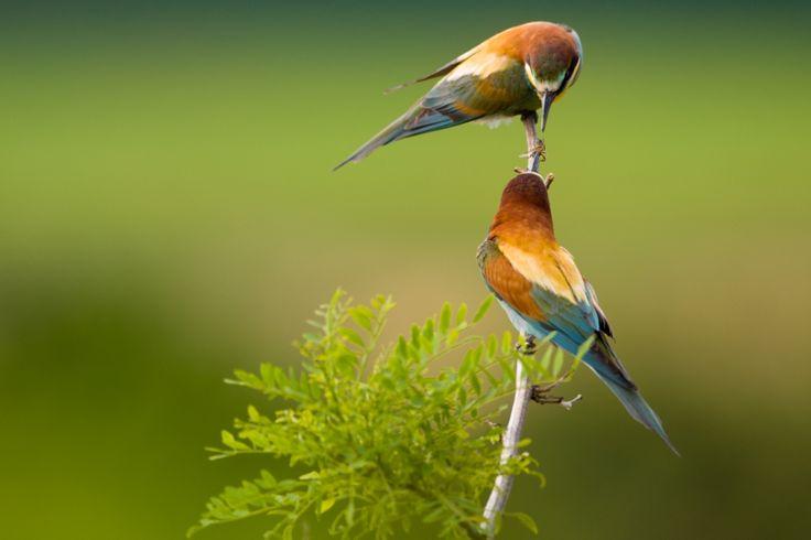 Il delta del Po è un'area unica al mondo, corridoio ecologico per decine di specie d'uccelli, habitat fondamentale per anfibi, rettili, mammiferi. Divisa in due.