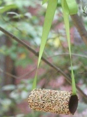 Vogelvoeder wc rol of pvc  insmeren met pindakaas door vogelvoer rollen en voilà