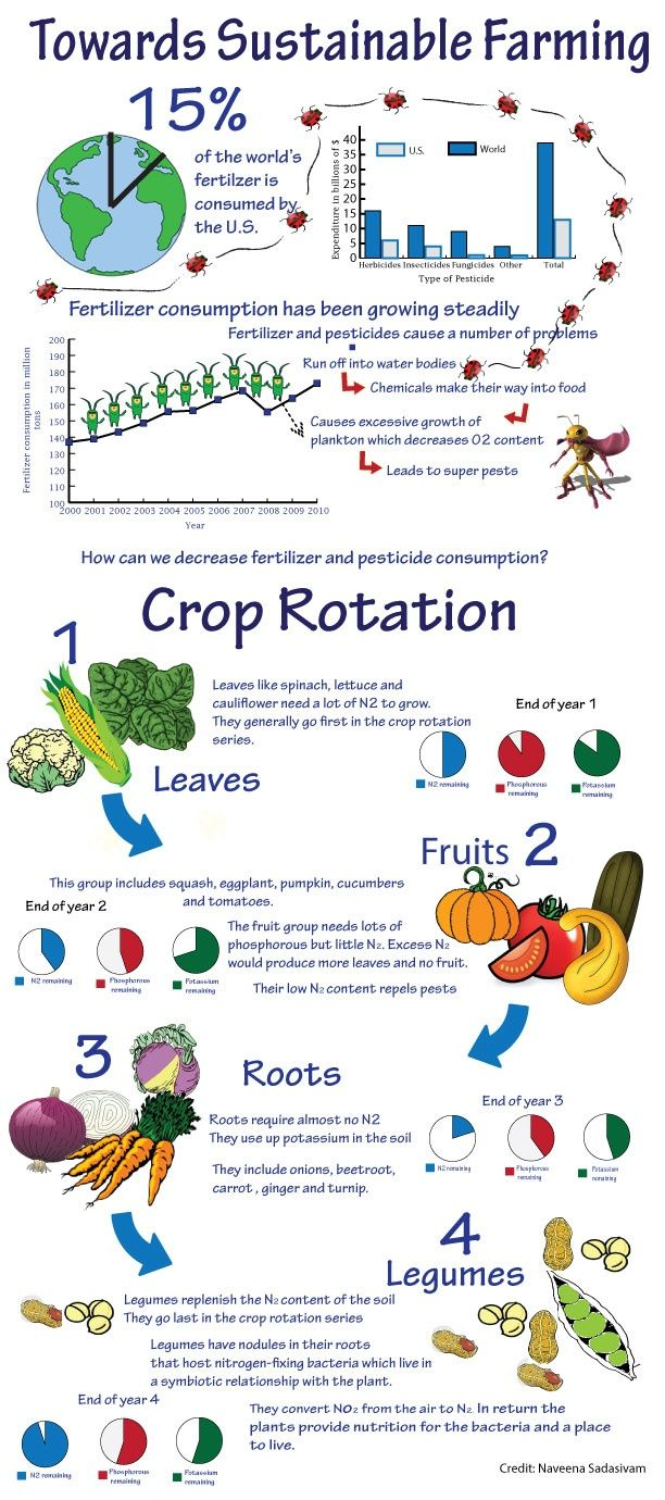 Crop rotation in your backyard home garden. Leaves, Fruits, Roots, Legumes