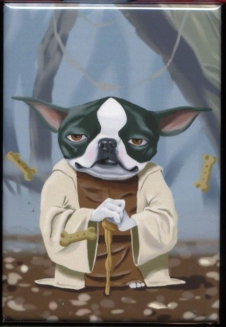 Boston Yodi: Yoda Terrier, Star Wars, Brian Rubenacker, Yoda Boston, Boston Terriers, Dog Art, Starwars