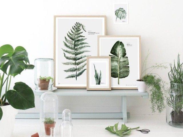 Des affiches botaniques au mur