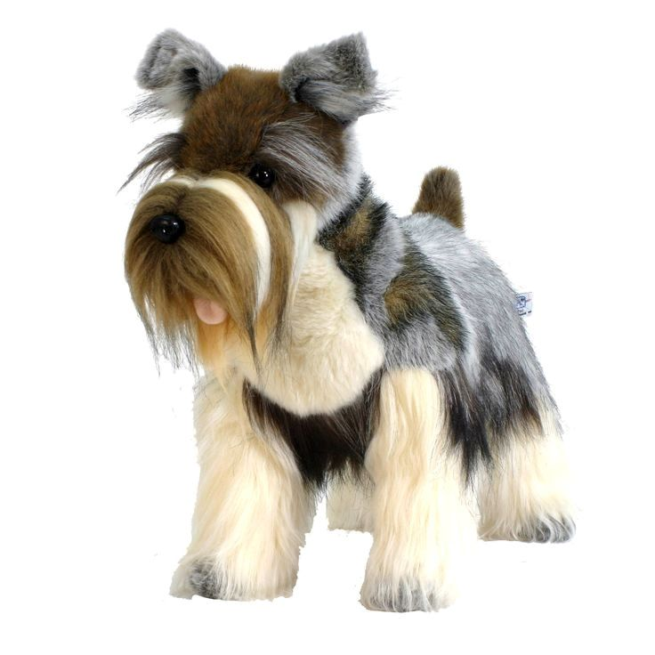 Pin By Dog Lover On Miniature Schnauzer Miniature Schnauzer Schnauzer Miniature Schnauzer Puppies