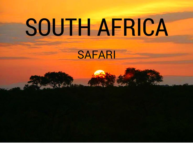 Considering a #Safari in #SouthAfrica ?  Read this first.  Click the pin to read the post from www.FlirtingWithTheGlobe.com