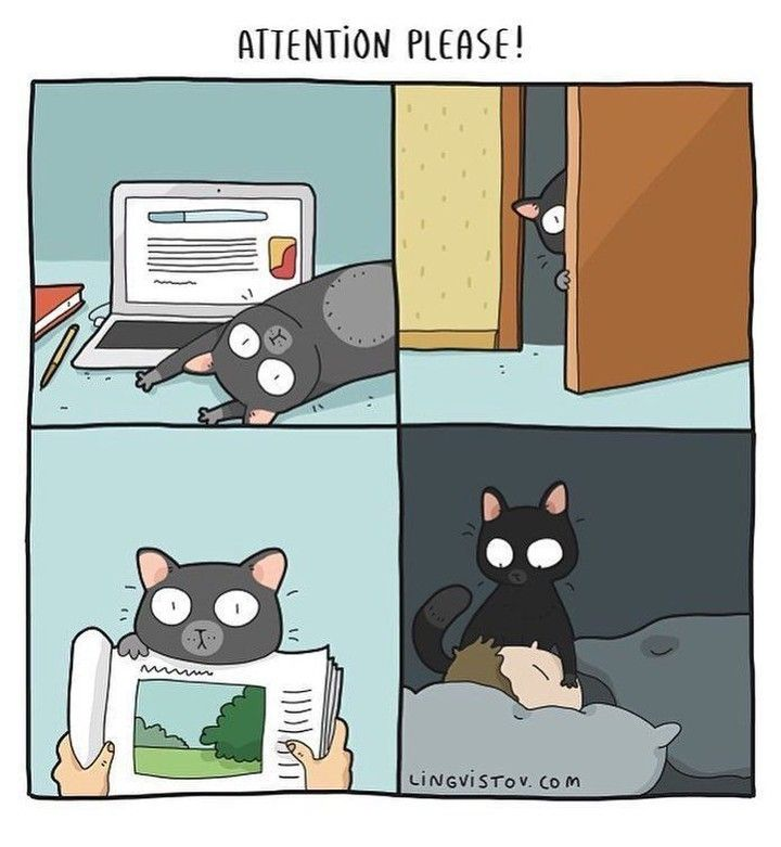 Pin By Karla Bernhoft On Kitties In 2020 Crazy Cats Cats And Kittens Cat Comics