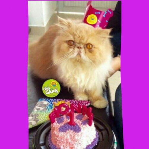 Cat-party!!