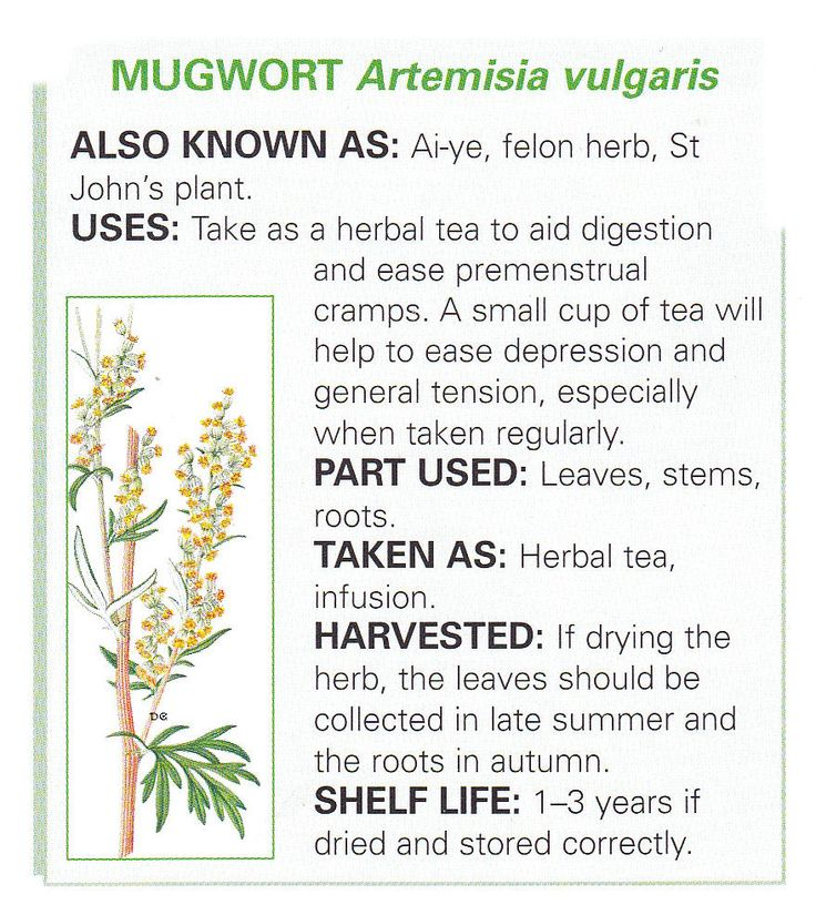 Mugwort ~ settles stomach & aids digestion; tea good for menstrual cramps *do NOT take when pregnant