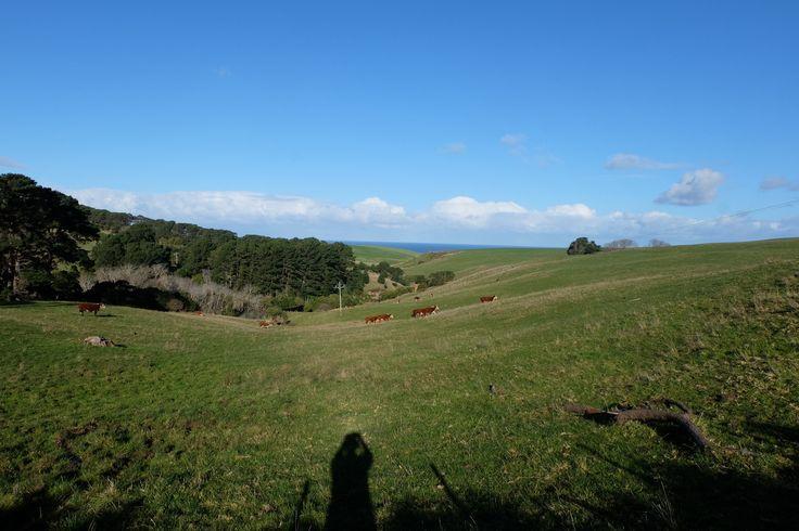https://flic.kr/p/WYb1uK | DSCF3056 | Rolling green pastures, Flinders, Victoria.