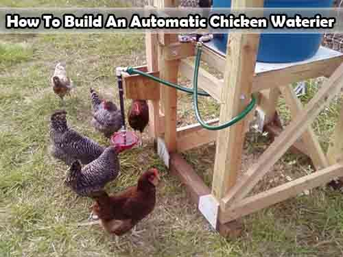 poultry chicken feeder for a wild looking bird proof pin rat rodent