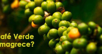 Café verde emagrece, queima gordura e combate diabetes