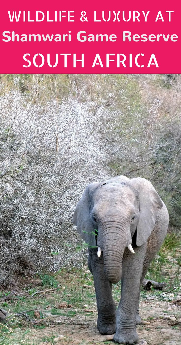 Want to do a safari at the Eastern Cape in South Africa? Shamwari Game Reserve has the most beautiful lodges AND the big five. We spotted elephants, rhinos and more. Click for our review
