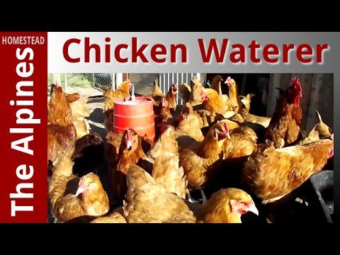 How to set up a Gravity Feed Chicken Water System