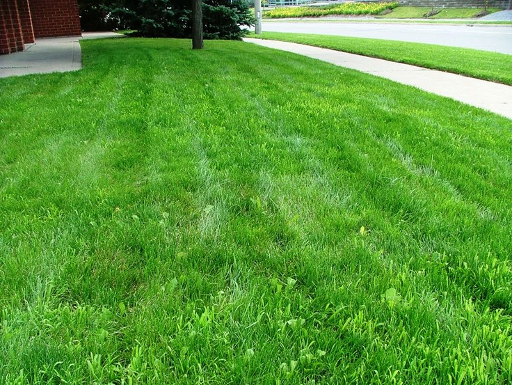 Green Grass Lawn Care Nebraska : Weed control green lawn lush care grasses landscaping