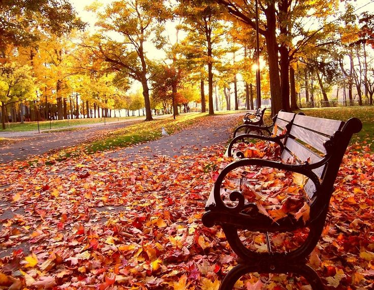 20 Reasons Why Fall is the Greatest Time of the Year | The Odyssey