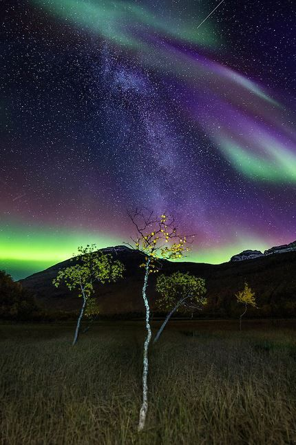 31 best images about beautiful on pinterest smiling for Northern light and garden